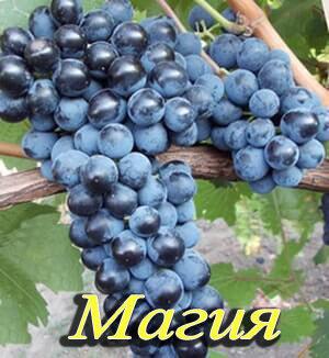 magiya 300x326 - Магия
