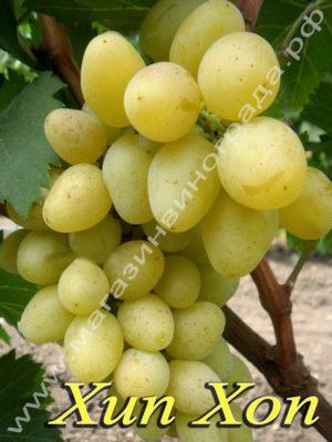 Сорт винограда Хип Хоп